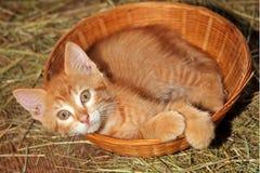 Basket Case Stock Images