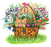 Basket with cat and flowers Royalty Free Stock Photography