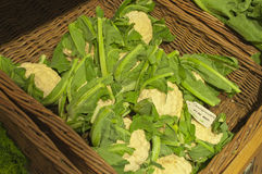 Basket of Cauliflowers Stock Images
