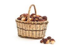 Basket of cepe mushrooms on white Royalty Free Stock Images