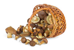 Basket and cepe mushrooms Stock Photography