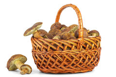 Basket with cepe mushrooms Royalty Free Stock Photo