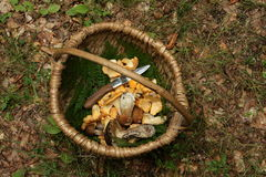 Basket of ceps and chanterelles Royalty Free Stock Photo