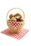 Basket champignons Stock Image
