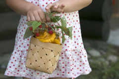 Basket with chanterelle and raspberries in girls arms Stock Images
