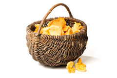 Basket with chanterelles Royalty Free Stock Photography