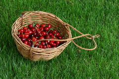 Basket With Cherries Stock Photography