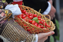 Basket of cherries Royalty Free Stock Photos