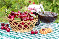 Basket of cherries, cherry jam with biscuit, cherry jam jar on background of  cherry tree Royalty Free Stock Images