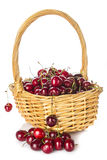 Basket with cherries isolated on a white background Stock Photo