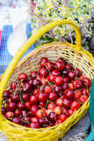 Basket with cherries on picnic. Fresh juicy cherries in a wicker basket on a picnic in the park stock photography