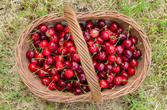 Basket of cherries Royalty Free Stock Image