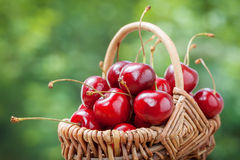 Basket with cherry Royalty Free Stock Photos