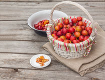 Basket with cherry plums Stock Images