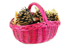 Basket with chestnut and pine-cone Royalty Free Stock Photography