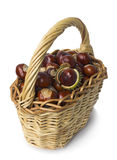 Basket of chestnut on white Royalty Free Stock Photos