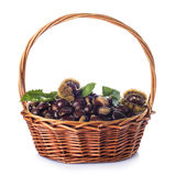 Basket with chestnuts isolated on a white background Stock Image