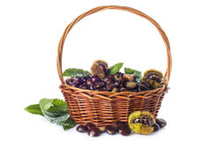 Basket with chestnuts isolated on a white background Stock Photography