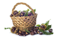 Basket with chestnuts isolated on a white background Royalty Free Stock Photo