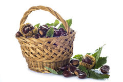 Basket with chestnuts isolated on a white background Royalty Free Stock Image