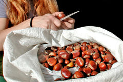A basket of chestnuts with one hand and knife Royalty Free Stock Photo
