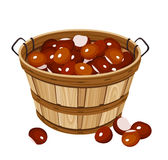 Basket with chestnuts. Vector illustration. Royalty Free Stock Photo