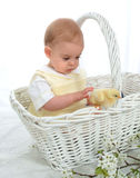 In a Basket with a Chicken stock photography