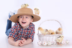 Basket with chicks Royalty Free Stock Image