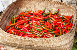 Basket of chillies Royalty Free Stock Photography