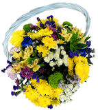 Basket of chrysanthemums and alstroemeria Stock Images