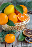 Basket with citrus and spruce branches. Stock Image