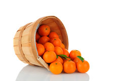 Basket of Clementines Royalty Free Stock Image