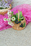 Basket with clover on pink background Stock Photography