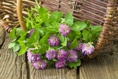 Basket with clover Royalty Free Stock Images