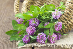 Basket with clover Royalty Free Stock Photo