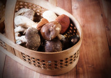 The basket with the collected mushrooms Vintage Stock Images