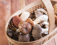 The basket with the collected mushrooms Stock Photos