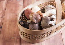 The basket with the collected mushrooms Royalty Free Stock Photography