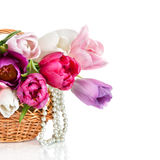 Basket with colorful bouquets of spring tulips flowers  isolated. On white Stock Photography