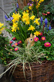 A basket of colorful flowers and rabbit doll , Switzerland Royalty Free Stock Photos