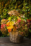 Basket with colorful Hydrangea in fall Stock Photo