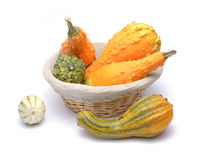 Basket and colorful pumpkins Royalty Free Stock Photography