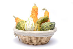 Basket and colorful pumpkins collection Stock Photos