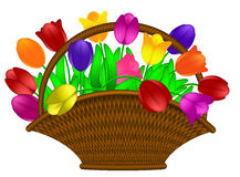 Basket of Colorful Tulips Flowers Illustration Stock Photos