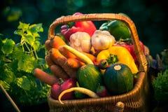 Basket colorful vegetables garden grass Stock Image