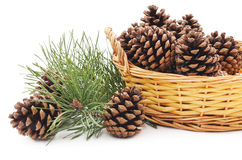 Basket with cones. Royalty Free Stock Photography