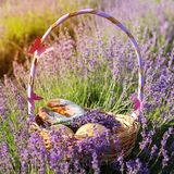 Basket with cookies in purple lavender flowers Stock Image