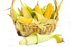 Basket with corn Stock Image