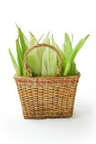 Basket with corn leaves. On white background Stock Photography