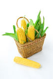 Basket with corns. On white background Stock Images